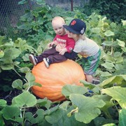 Giant_pumpkin_2014-180x180.jpg