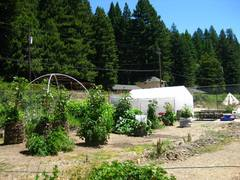 Greenhouse_in_garden-240x180.jpg