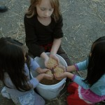 grain-harvest-small-150x150.jpg