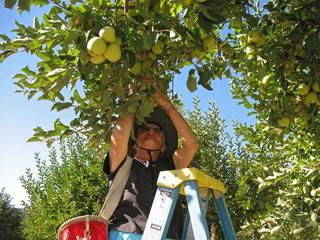 Karen picking apples